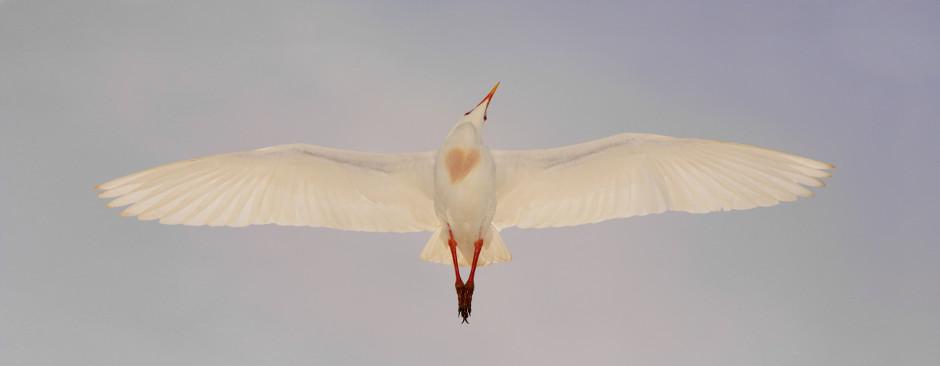 Birdwatching a Cavallino